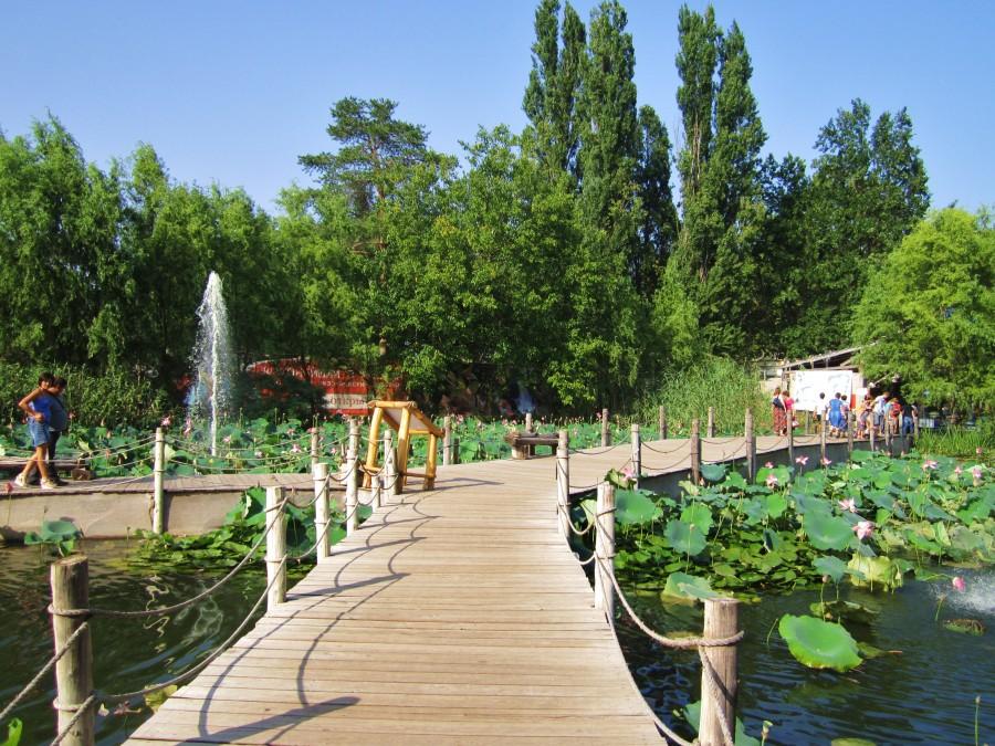 сафари парк краснодара