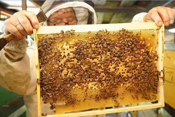 beekeeping-russia6