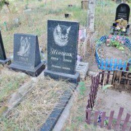Бизнес план кладбища домашних животных